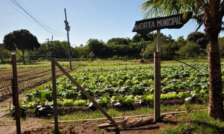 MDG Biofortified food crops in Brazil