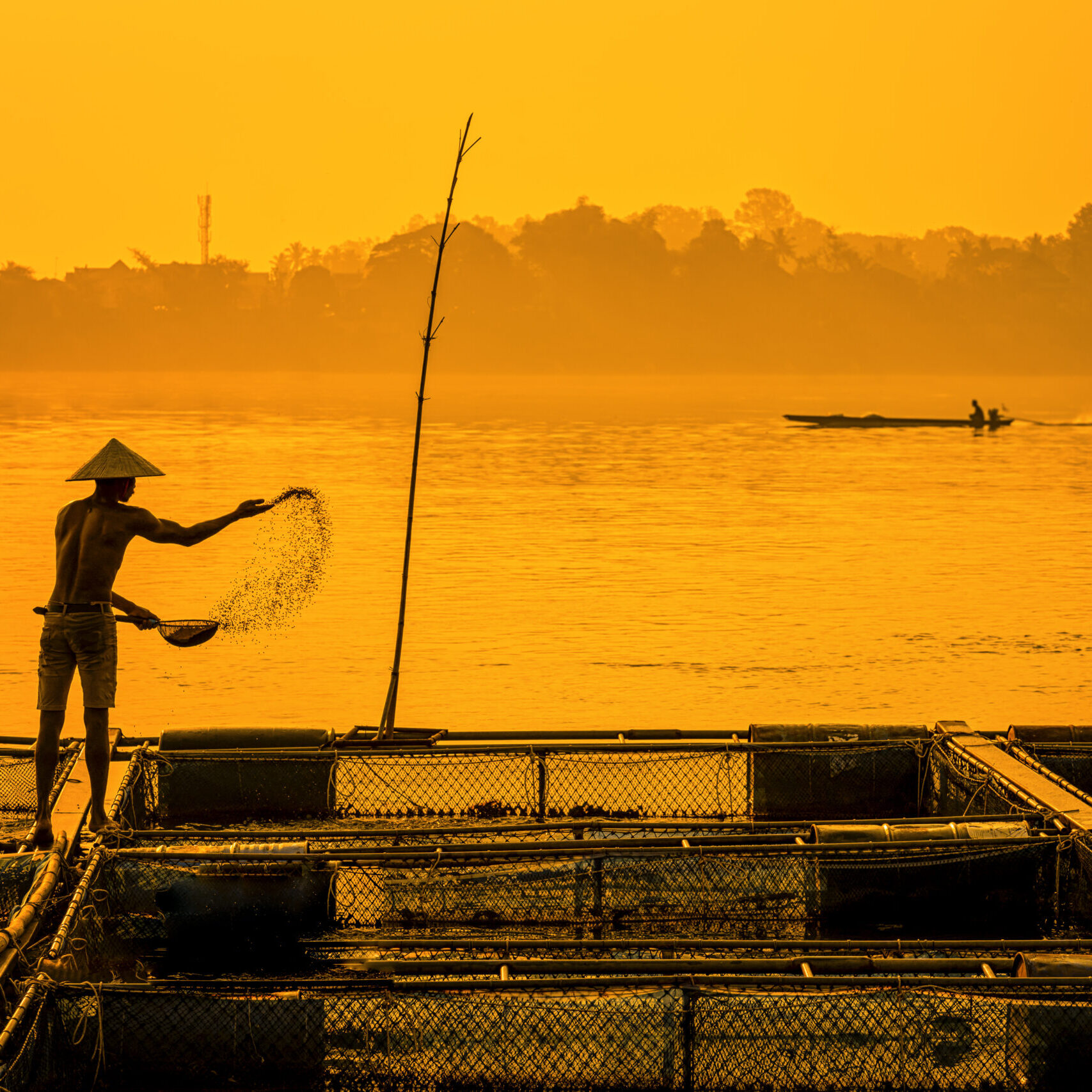 Fisherman feeds the fish in a commercial farm in Mekong river, Nongkhai. Farmers feeding fish in cages, Mekong River. The Tilapia for feeding fish in northeast of Thailand.